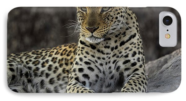 Leopard Panthera Pardus On Termite IPhone Case by Panoramic Images