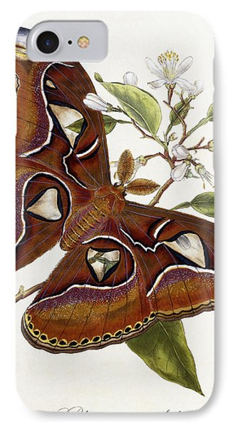 Lepidoptera IPhone Case by Edward Donovan