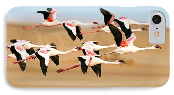 Lesser Flamingoes In Flight IPhone Case by Tony Camacho