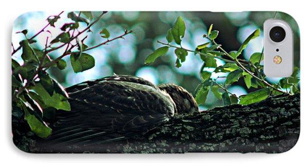 Let Sleeping Hawks Lie IPhone Case