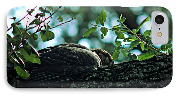 Let Sleeping Hawks Lie IPhone Case by Greg Allore