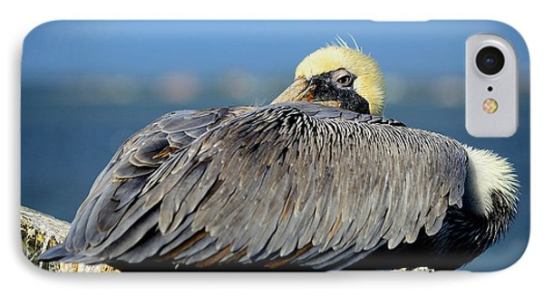 Let Sleeping Pelicans Lie IPhone Case by Susan Molnar
