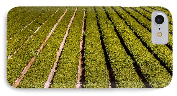 Lettuce Farming IPhone Case by Robert Bales