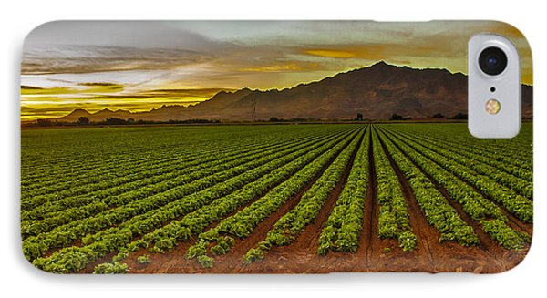Lettuce Sunrise Phone Case by Robert Bales