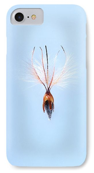 Leucadendron Rubrum Seed IPhone Case