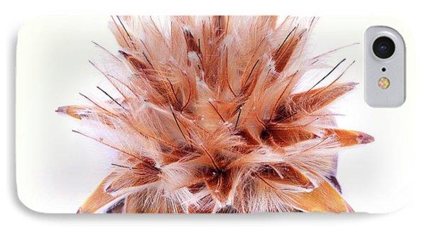 Leucadendron Rubrum Seed Head IPhone Case