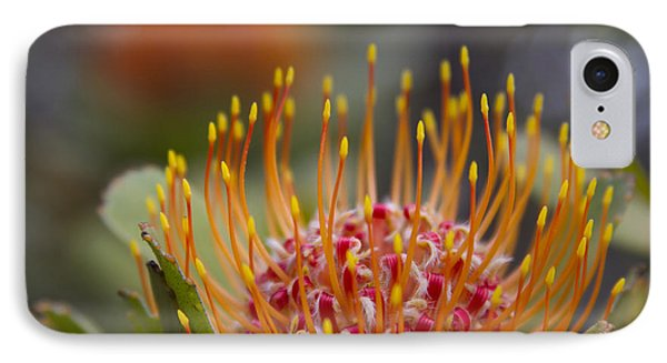 Leucospermum Pincushion Protea - Tropical Sunburst IPhone Case by Sharon Mau