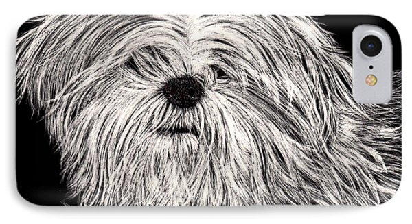 Lhasa Apso IPhone Case by Terri Mills