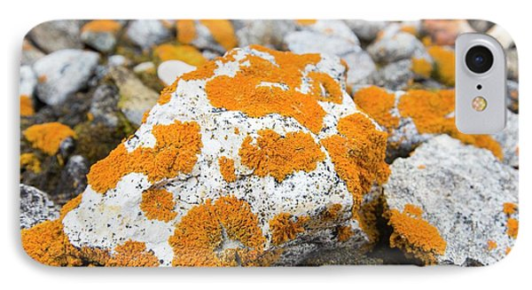 Lichen Covered Pebbles On A Raised Beach IPhone Case