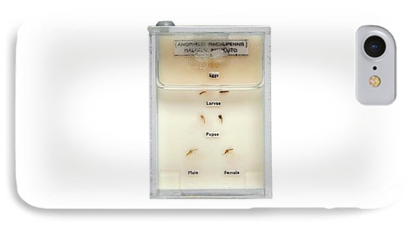 Life Cycle Of Malaria Mosquito IPhone Case by Gregory Davies