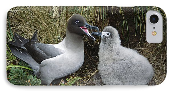 Light-mantled Albatross Feeding Chick IPhone Case by Tui De Roy