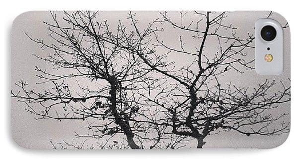 Lightness Tree IPhone Case by Jose Barbosa