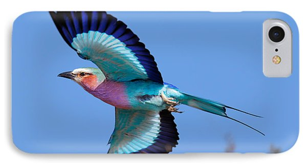 Lilac-breasted Roller In Flight IPhone Case by Johan Swanepoel