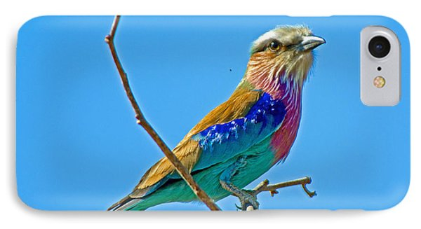 Lilac-breasted Roller In Kruger National Park-south Africa IPhone Case by Ruth Hager