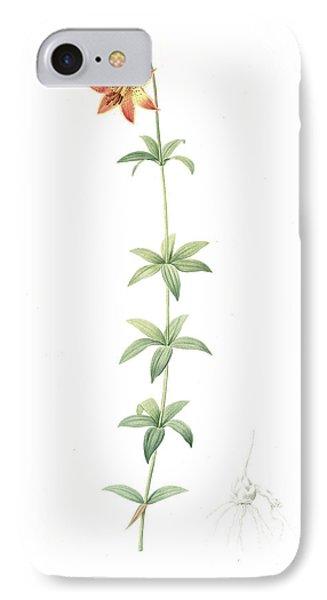 Lilium Penduliflorum, Lilium Canadense Lis à Fleur IPhone Case by Artokoloro