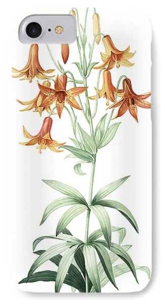 Lilium Penduliflorum, Lis à Fleurs Pendantes IPhone Case by Artokoloro