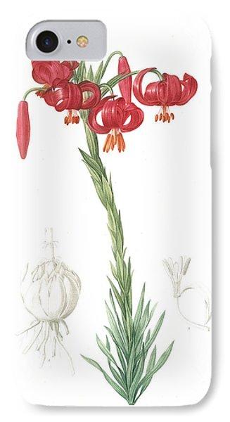 Lilium Pomponium, Lilium Chalcedonicum Lis Pompon IPhone Case