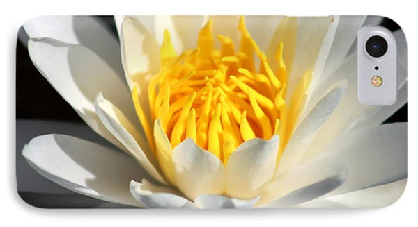 Lily Flower IPhone Case by Marty Gayler