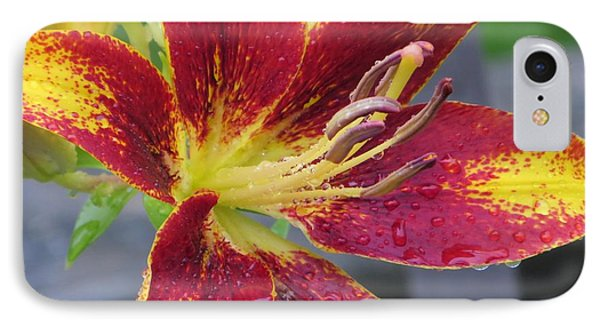 Lily In My Patio Phone Case by Sonali Gangane