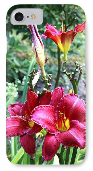 Lily In The Garden IPhone Case by Barbara Giordano