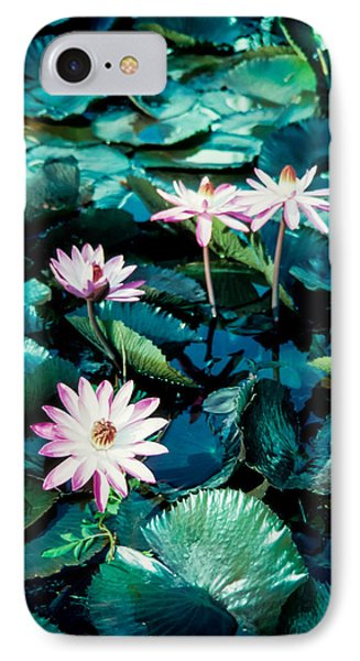 Lily IPhone Case by Randy Sylvia