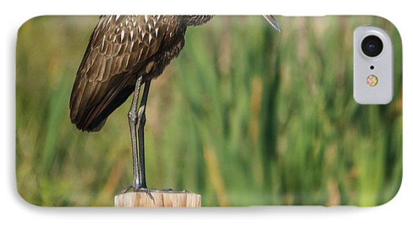 Limpkin IPhone Case by Jane Luxton