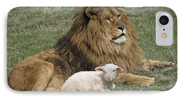 Lion And Lamb Phone Case by Wildlife Fine Art