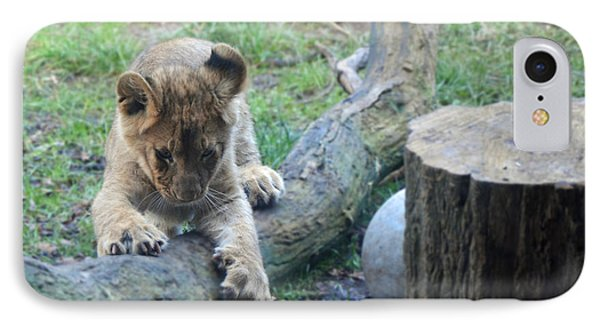 Lion Cub At Play IPhone Case