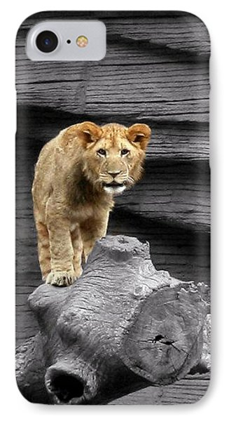 Lion Cub IPhone Case by Cathy Harper