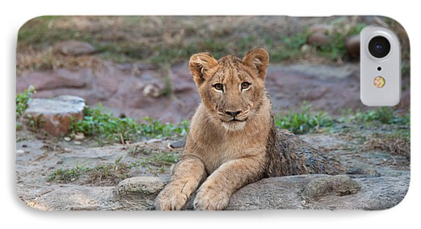 IPhone Case featuring the photograph Lion Cub by John Black