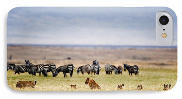 Lion Family Panthera Leo Looking IPhone Case by Panoramic Images