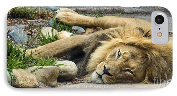Lion I IPhone Case by Chuck Kuhn