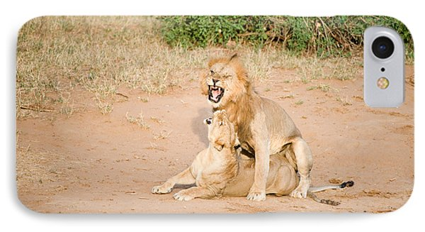 Lion Pair Panthera Leo Mating IPhone Case by Panoramic Images