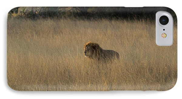 Lion Panthera Leo In Tall Grass That IPhone Case by Panoramic Images