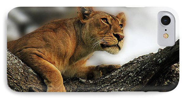Lioness IPhone Case by Christine Sponchia