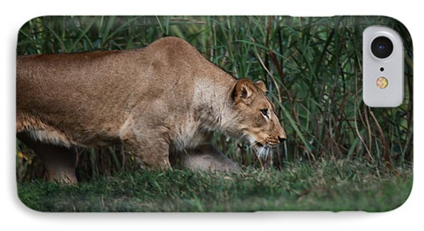 IPhone Case featuring the photograph Lioness Stalking by Joseph G Holland