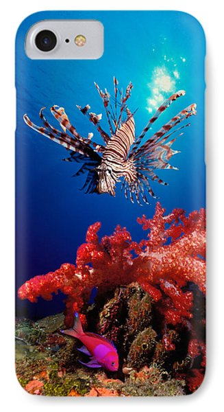 Lionfish Pteropterus Radiata IPhone Case by Panoramic Images