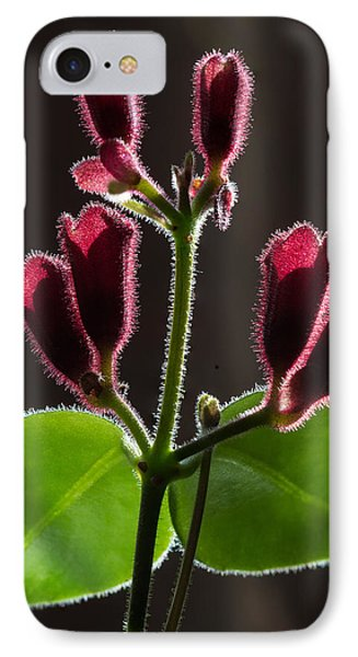 IPhone Case featuring the photograph Lipstick Flower by Vladimir Kholostykh
