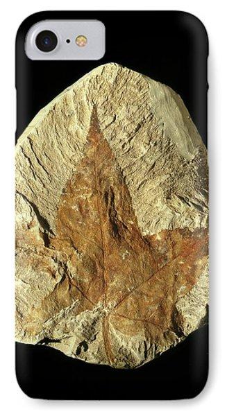 Liquidambar Fossil Leaf IPhone Case by Gilles Mermet