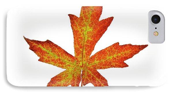 Liquidambar Styraciflua Leaf IPhone Case by Cordelia Molloy