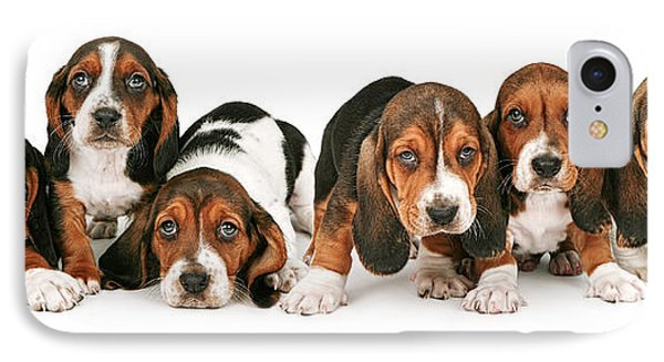 Litter Of Basset Hound Puppies IPhone Case