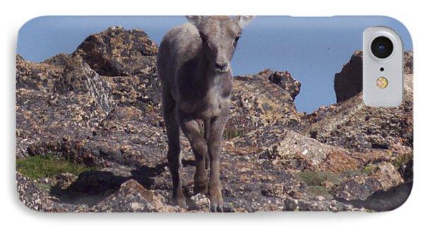 Little Big Horn Sheep Looking IPhone Case