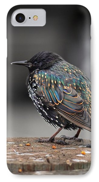 Little Bird In Pacifica IPhone Case by Alex King