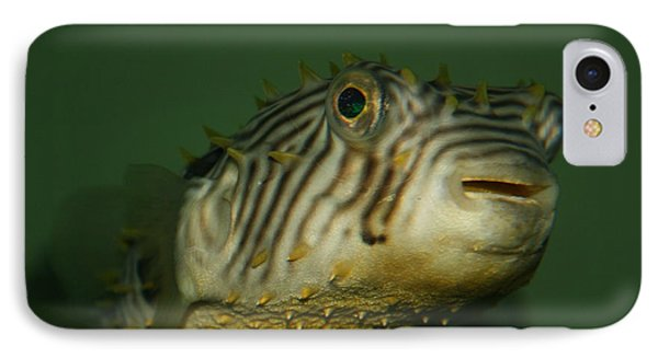 Little Porcupine Fish IPhone Case
