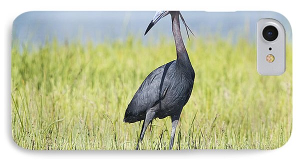 Little Blue Heron In The Marsh IPhone Case by Bob Decker