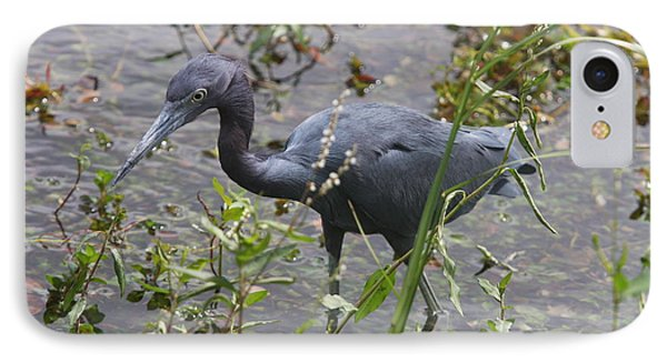 Little Blue Heron - Waiting For Prey IPhone Case by Christiane Schulze Art And Photography