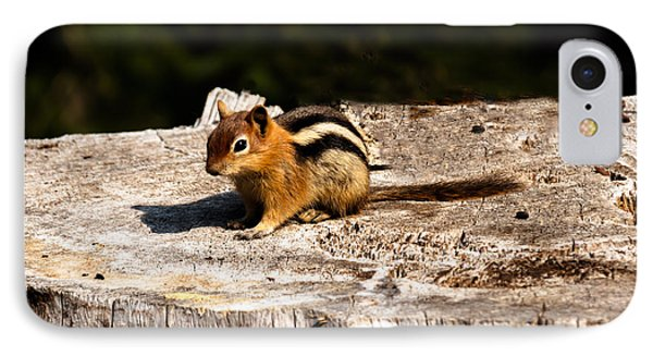 Little Chipmunk IPhone Case by Robert Bales