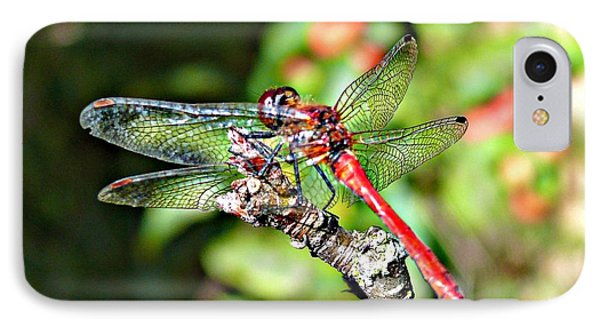 IPhone Case featuring the photograph Little Dragonfly by Morag Bates
