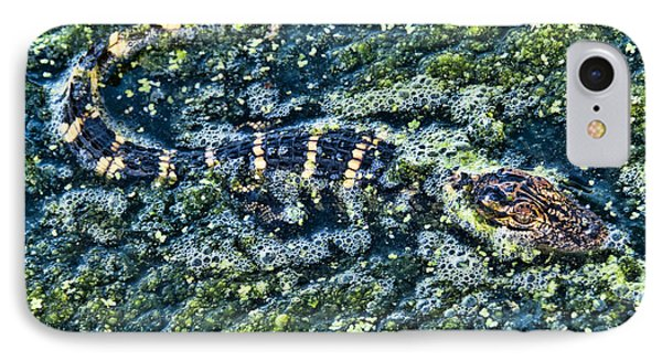 IPhone Case featuring the photograph Little Gator by Don Durfee