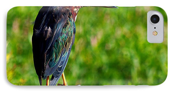 Little Green Heron 002  IPhone Case by Chris Mercer